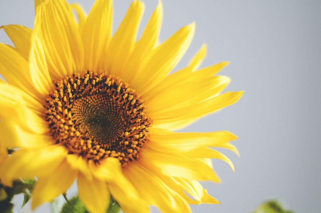 Kuva: Unsplash, keltainen kukka